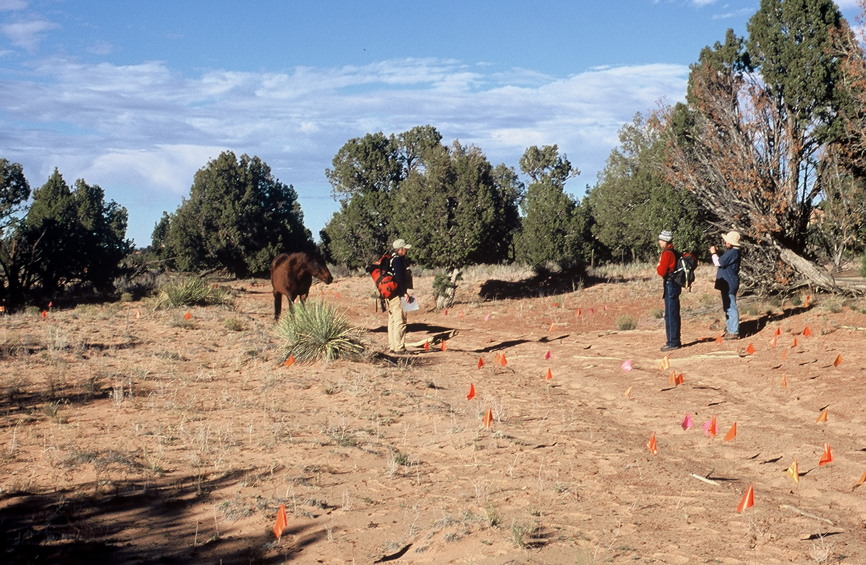 Survey team finds unprotected artifacts in the middle of a vehicle track. Photo/Jill Ozarski.